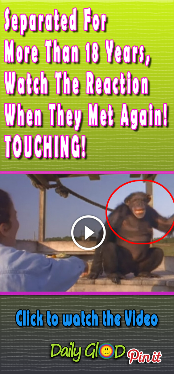 She was afraid they had forgotten her after all this time. #friends #ape #touchingstories #sadstory #sad #happyending #beststory #beststories #touchingvideo#emotionalvideo#inspiring#uplifting#uplift#inspire#gorgeous#animalsfriends #bestfriends#forgotquote#forgotten