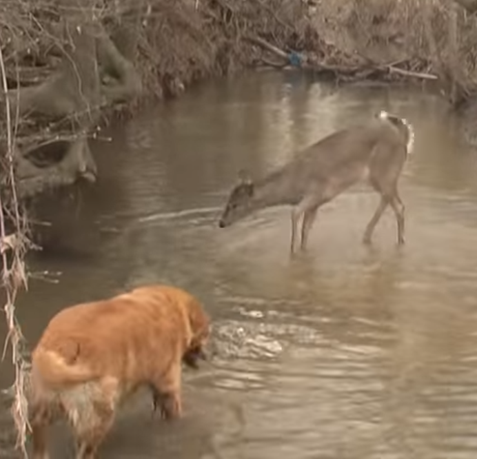 animals,deer,dog,wild,bound,amazing,fun,cute,meeting,incredible,must watch