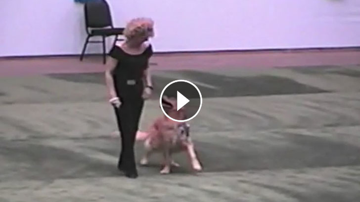 Golden Retriever And His Owner Impress The Crowd With Their Awesome Grease Dance Performance