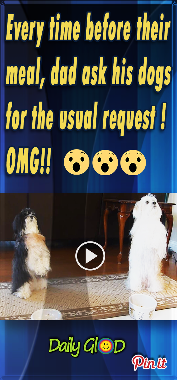 viral,video,pary,dogs,pets,puppies,puppy,pugs,dress,dressing,viral video,cute,cute puppies,amazing,most viewed,most shared,most watched,trained dog,cutest dogs,amazing dogs