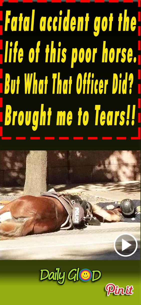 animals,viral,horse,rescue,save,life,helping,pets,puppy,accident,car,drenched,viral video,viral stuff,viral post,most viewed,police horse,fatal accident,hitted by car,last breath